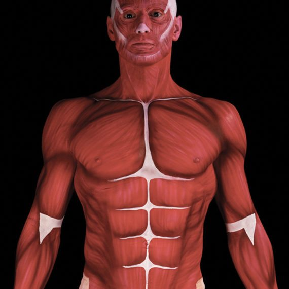 Body painting anatomy